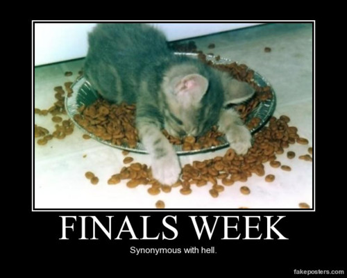 finalsweek-kitty-photo