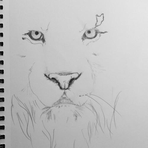 Beginnings of a Tiger