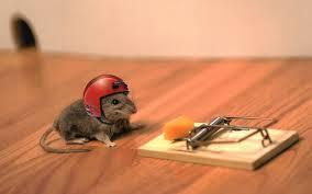 MouseHelmet