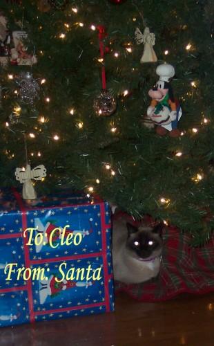 Cleo Tree