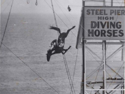 horse-diving