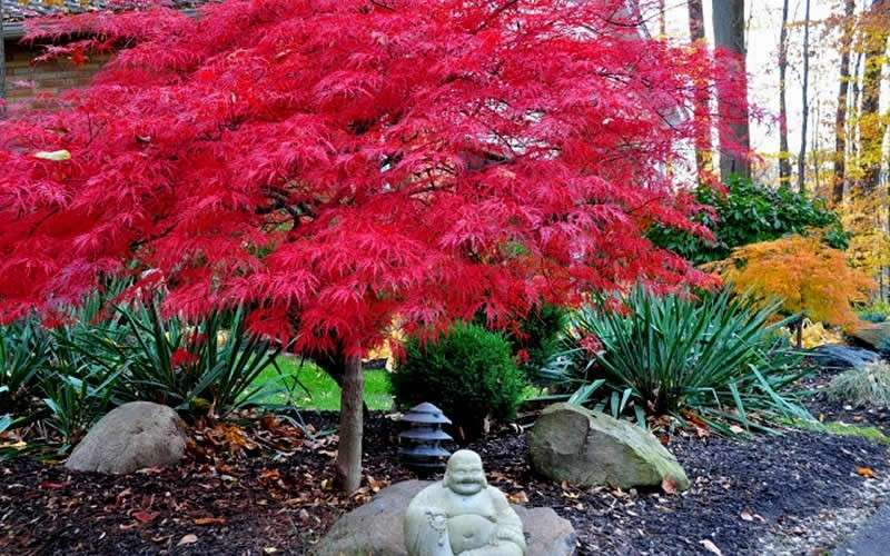 What s 1 little japanese maple worth tessera guild for Garden design with japanese maple